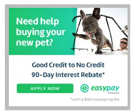 pet loans, easy financing, rebate, no credit needed, no down payment, pet financing,