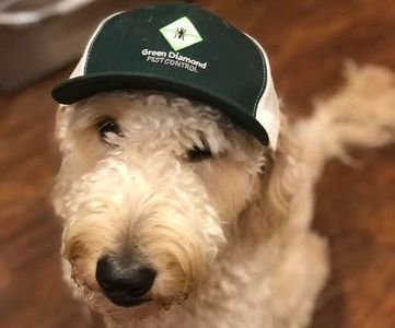 Green Diamond's mascot, Murphy! He can sniff out any pest problem ;).