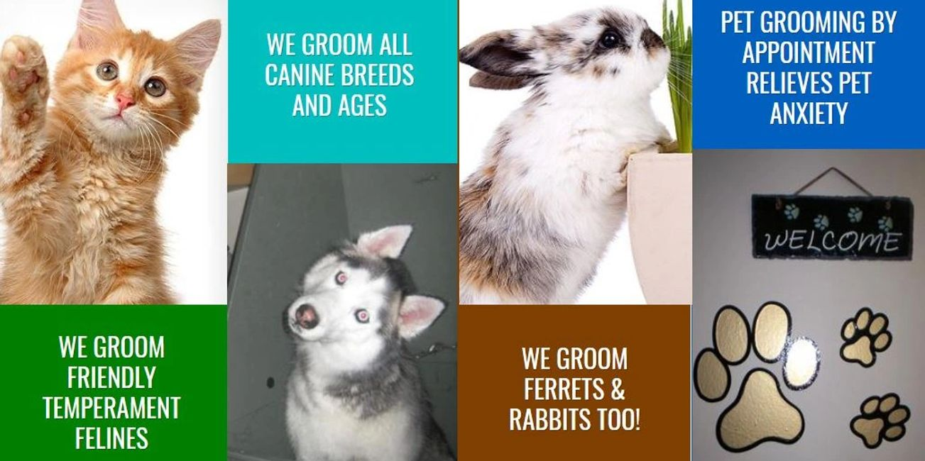 We groom all canine breeds, sizes and ages.  We groom friendly temperament felines and rabbits.