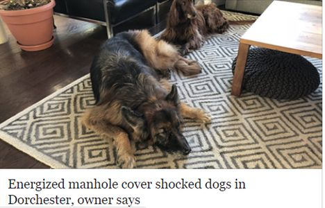 Dog Shocked by charged manhole cover in Boston