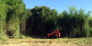 Heavy bamboo & brush cutting to clear a property South of Denton, Texas.