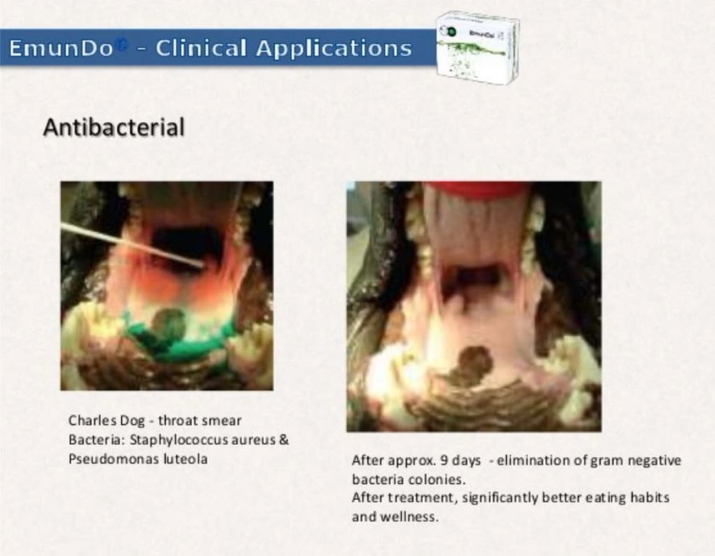 EmunDo clinical applications slide showing antibacterial effects on a dogs mouth after nine days.