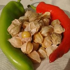 Ground Cherries and Anaheim Peppers