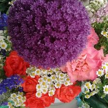 Allium and other freshly cut flowers