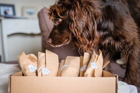 Sev from @spaniellife with his Chew Trial box