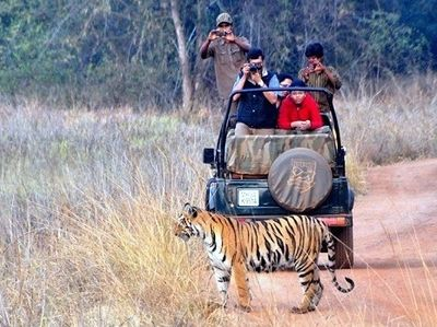 Tadoba Open Gypsy Safari