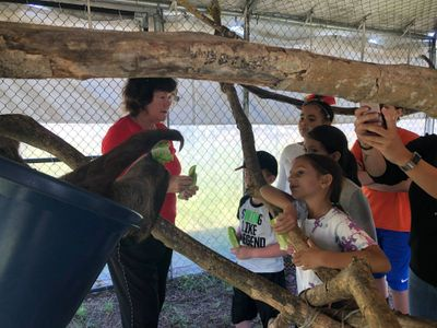 tour with kids feeding sloths