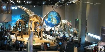 Dallas Area Attractions