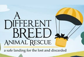 A Different Breed Animal Rescue
