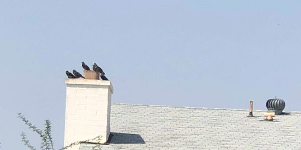 This is why you need a Chimney Cap!