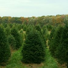 The story behind Fir Heaven Sake Christmas Tree Farm