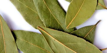 Turkish Bay leaf