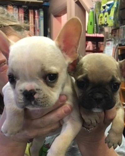 Pet Paradise Pet Supply Pet Store Puppies Grooming
