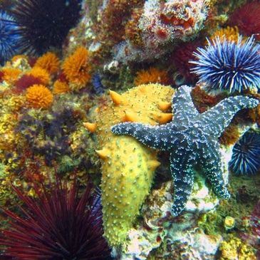 Our reefs abound with life - tube worms, sea cucumber, sea stars, anemones & urchins