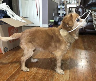 blind dog bumper collar videos