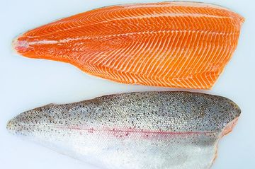 Rainbow trout, cutthroat trout, chinook salmon, coastal steelhead, brook trout, lake trout.