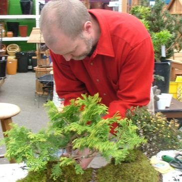 Bonsai training at AiShinKai Dojo for studying nature in martial and cultural arts.