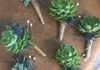 Succulent boutonniere with twine accent.