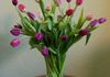 """Just Tulips"" - For tulip lovers like we are. Shown at $65. Also available at $85. Ask about our fringed tulips and other fancy tulip arrangements."