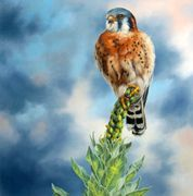 A kestrel perched on a mullion weed
