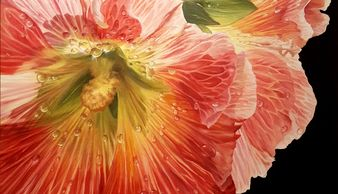 close up of a hollyhock bloom