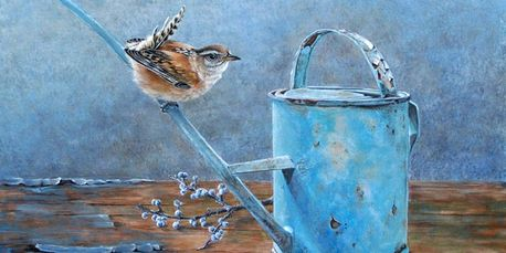 A wren perched on an old watering can
