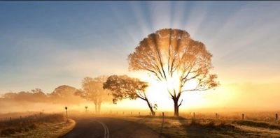 Love Living Light tree with rays symbolizing the Creator's light shining through us!