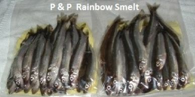 Rainbow Smelt: preserved (P&P) smelt, several sizes, excellent long-term storage, ideal trolling or casting bait.  Very durable on the hook!