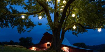 Festoon Lighting in trees Smart Services Lighting