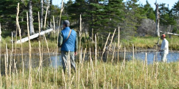 salmon Newfoundland Atlantic salmon trout  fly fishing  St John's  guides sea-trout Avalon