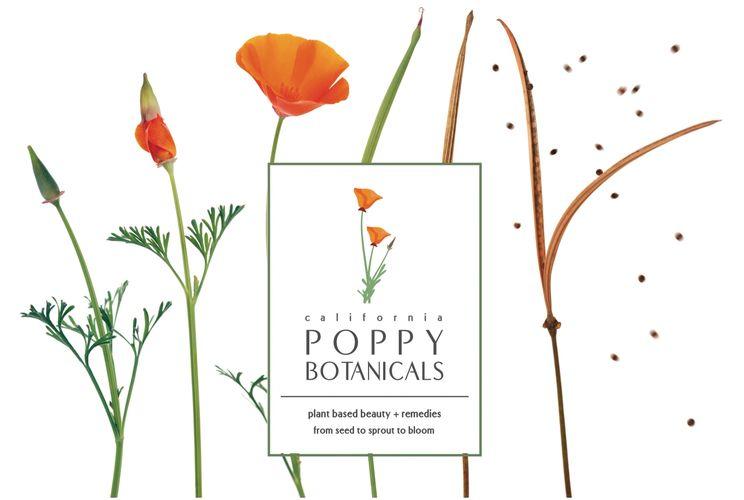 Poppy botanicals herbal skin care products herbalism herbal skin care products made using traditional herbal medicine practicess mightylinksfo