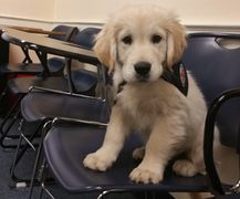 therapy dog classroom school