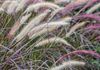 5902, Flowing Grasses