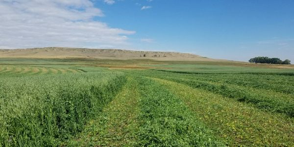 Heritage organic farm for sale, irrigated hay ground, Conrad, Montana, Kelly parks