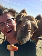 feed treats to our friendly camels
