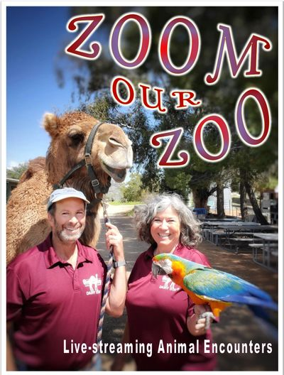 zoom our zoo, zoom meeting entertainment, livestreaming animals,