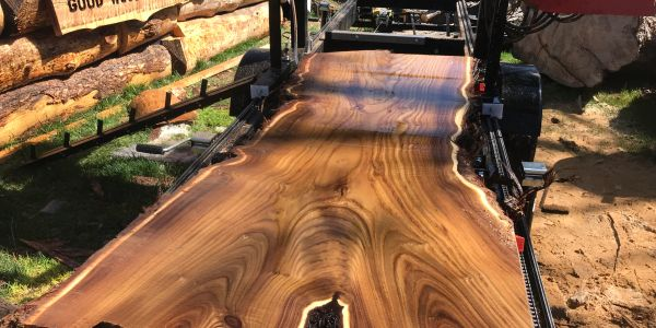 beautiful Russian olive live edge slab fresh cut on the timberking 1400