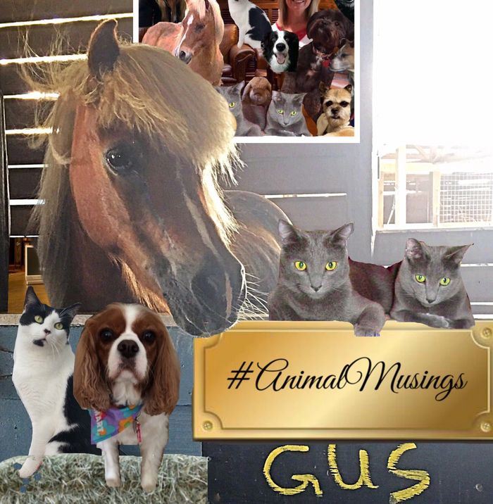 #AnimalMusings is inspired by our authors, contributors, and followers.