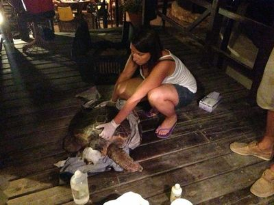 Maya helping the vet taking care of an injured sea turtle in Athen's Archelon rescue center