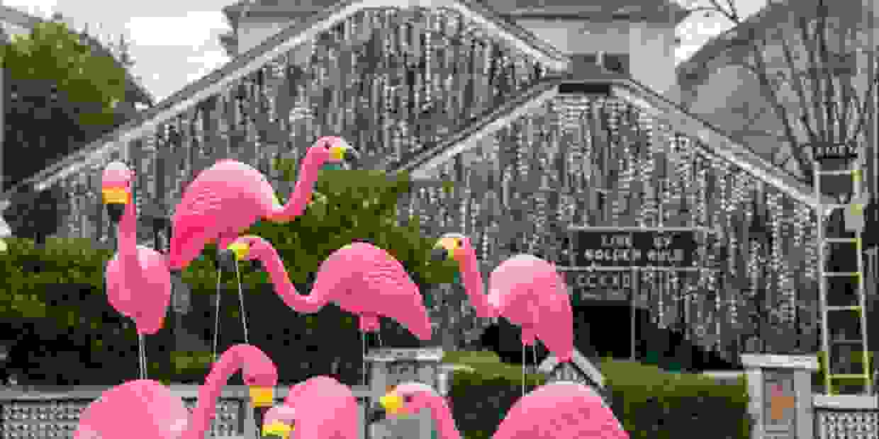 Flamingos at Beer Can House