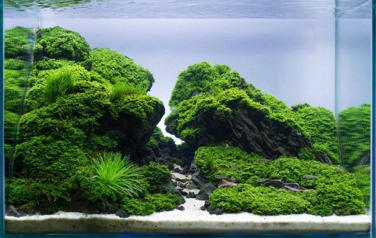 Inspiration Aquascaping Supply