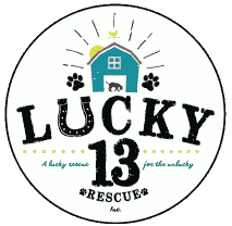 Lucky 13 Rescue - A lucky rescue for the unlucky
