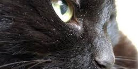 Pricing Bookings Salon Kitty