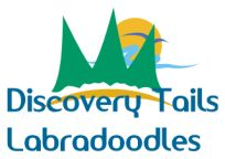 discovery tails labradoodles