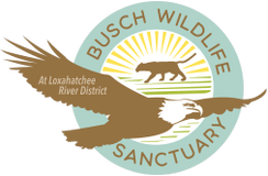 Busch Wildlife Sanctuary