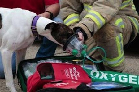 Losing a pet due to a house fire can be a devastating experience. As most pet owners leave their fur