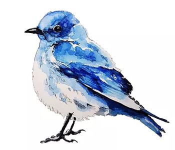 Bluebird image in watercolor