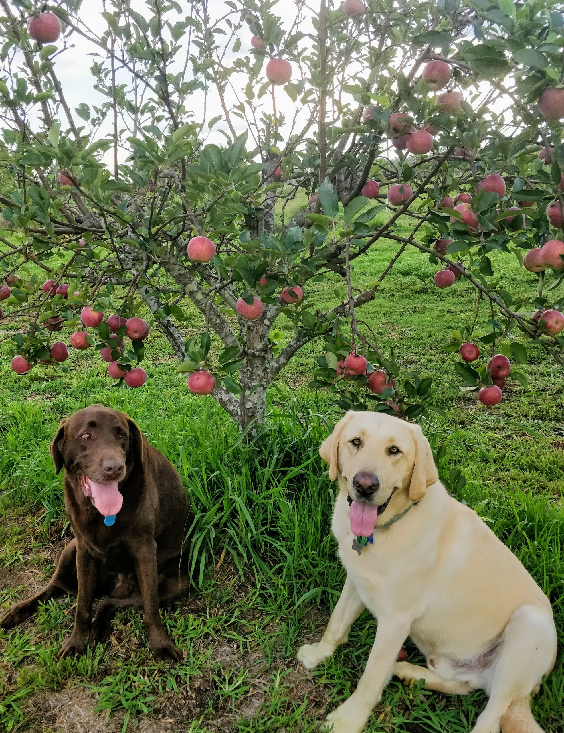 Meet Stanley and Hugo. Our resident labradors who will greet you when you arrive.