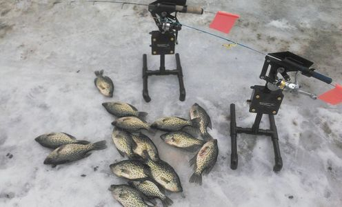 Automatic Jigging Tip Down catching crappies