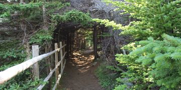 Biscan Cove Trail, Pouch Cove, Newfoundland, Canada, 5  min from Murray House Vacation Home